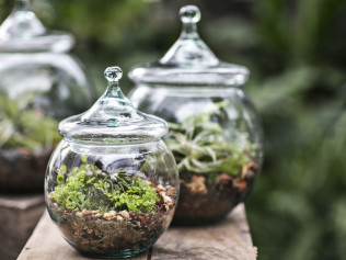 Terrarium Kits: 20% Off