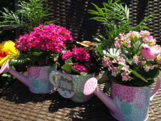 Watercan & Teacup Planters: 50% Off