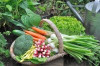 backyard-vegetable-garden-1525293686