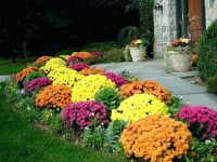 fall-garden-zone-8-zone-8-fall-vegetable-garden-mums-other-fall-garden-favorites-the-planting-a-in-south-zone-zone-8-fall-vegetable-garden-flower-garden-zone-8