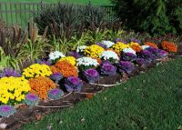 fall-border-ornamental-grass-kale-SS_87407705-560X400