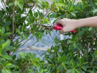 how-to-prune