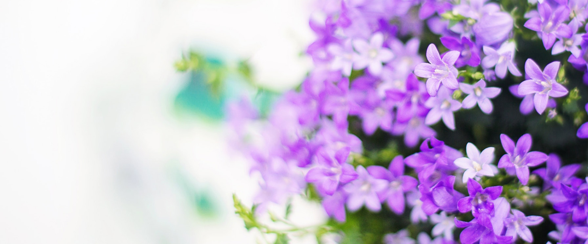 Find The Perfect Plants For Your Landscape and Garden Needs