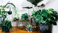 grouped-big-leaf-houseplants-sun-0217